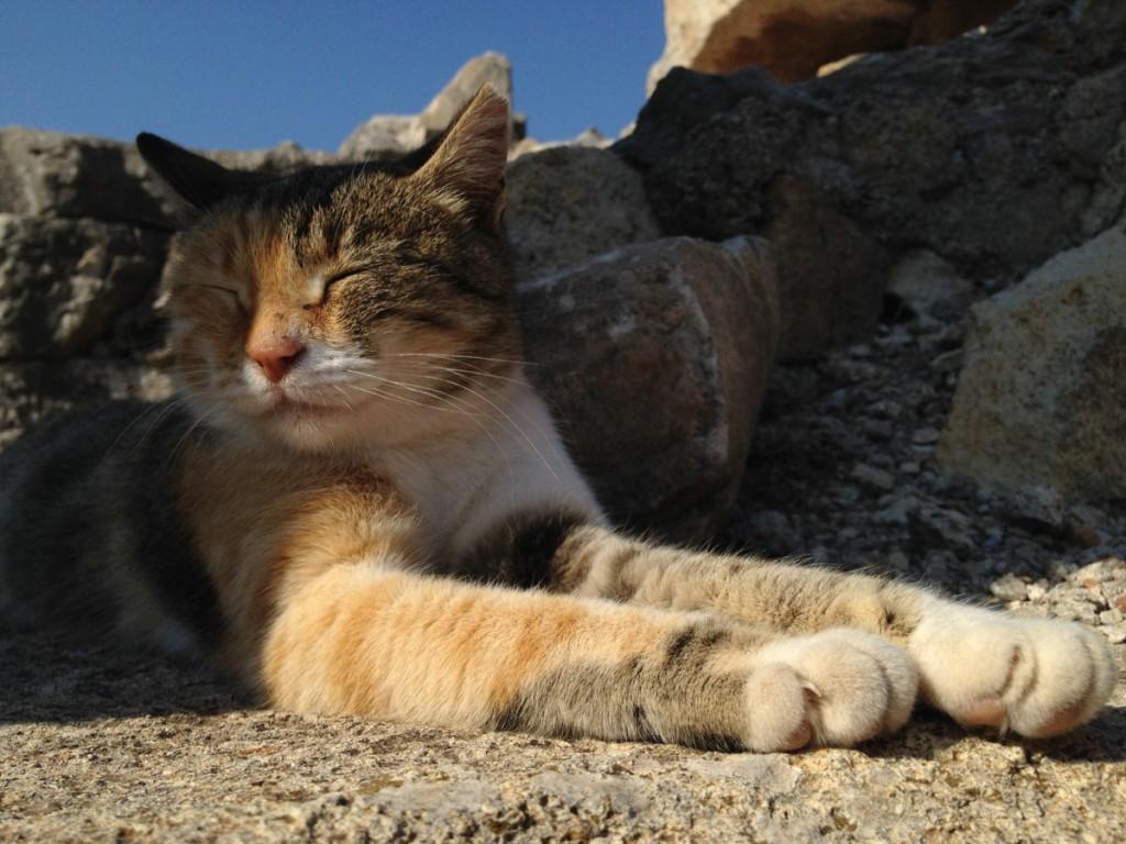 iPhone-cat-photo-1024x768