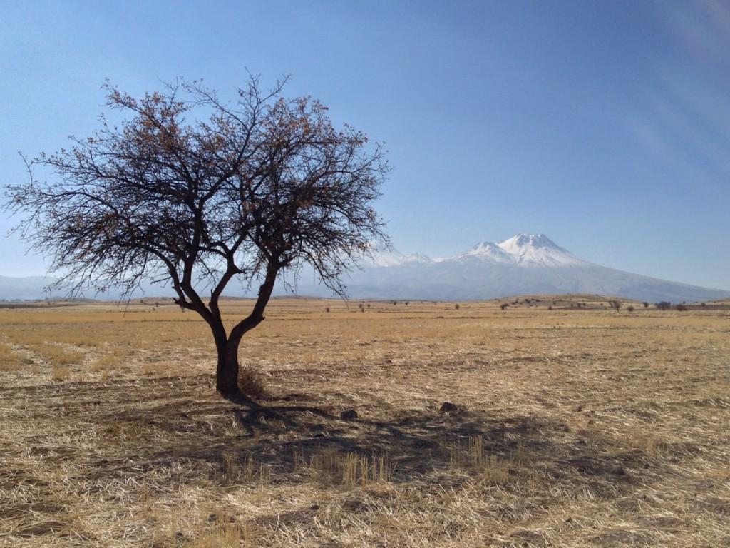 iPhone-landscape-balanced-1024x768